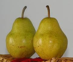 pair-of-pears